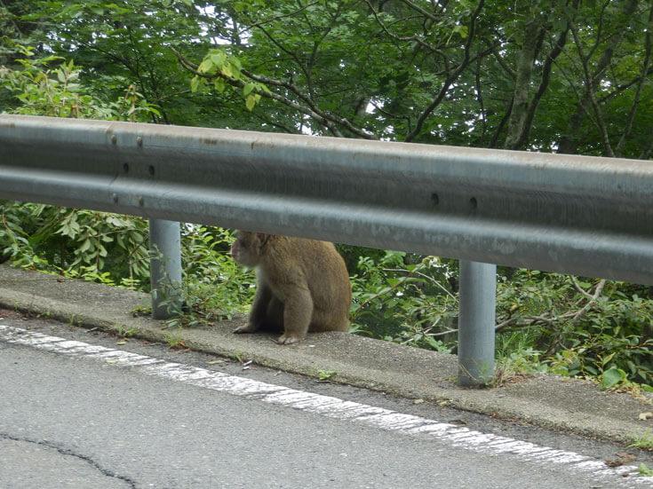 栃木県日光市猿