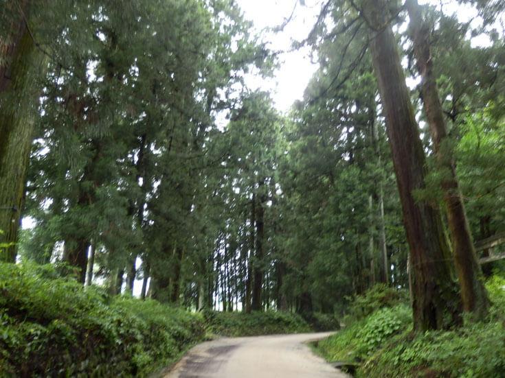 栃木県日光杉並木街道