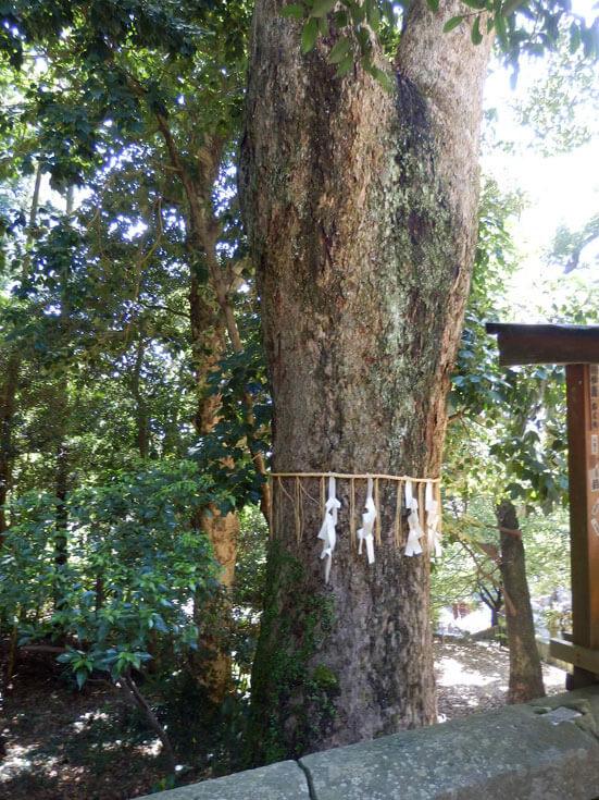 静岡県静岡市の旅行久能山東照宮神廟金の成る木