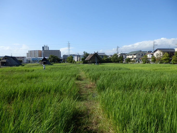 静岡県静岡市の旅行登呂遺跡田んぼ地帯