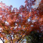 東京都内で紅葉観光におすすめな殿ヶ谷戸庭園